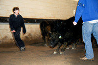Animal Handling Class at the livestock center