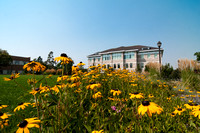 Hundreds of yellow coneflowers fill the Spori Quad flower beds during the summer months.