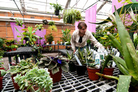 Student Ashlee Wheeler is working in the plant shop located in the Benson Building's greenhouse. Plants here are grown by students and sold to the public year round.