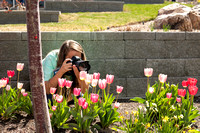 Kateyln Crompton, a photographer for University Relations, takes pictures of blooming tulips, just outside the library.