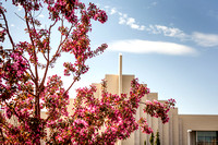 A blooming tree in front of the Taylor Building, shows its first signs of spring.