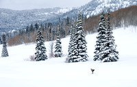 A cross country skier at Targhee Nordic Track.