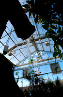 Jungle Greenhouse in the Ezra Taft Benson Building.