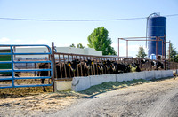 The Livestock Center is west of BYU-Idaho's main campus off highway 33. Spring 2013