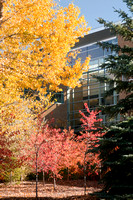 Beautiful autumn color frames in the Thomas E. Ricks Building.