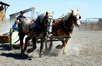 Learning to drive a team of draft horses at the BYU-Idaho Livestock Center.