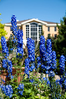 Gordon B. Hinckley Building is framed by beautiful blue flowers.