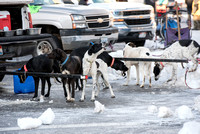 The centennial race of Ashton, Idaho's dog sledding race.