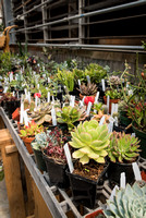 Various succulents are for sale at the Plant Shop in the Benson Building.