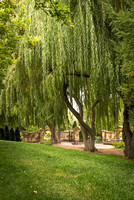 The weeping willows in the gardens. 2017