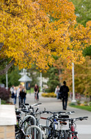 Fall Foliage 2013, BYU-Idaho