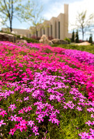 BYU-Idaho campus in the spring time in all it's splendor.
