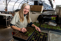 Mary Martin working in the green house starting all the flowers for campus this next summer.