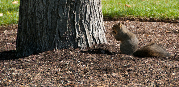 A squirrel, one of our campus wildlife.