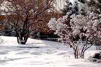 Winter beauty in the Thomas E Ricks Gardens.