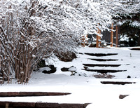 Winter on Campus, in the gardens