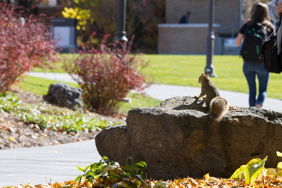 A quick glimpe of a squirrel in front of the Romeny Building.