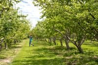 The BYU-Idaho Apple Orchard.