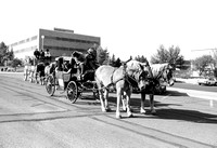 Homecoming parade, horses and carriage.