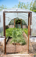 Did you know there are many different types of greenhouses on campus?