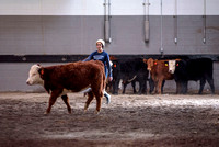 Students at BYU-Idaho work with the cattle at the Livestock Center by training the cattle to go where the students need them to go.